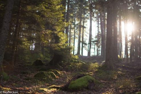 Voir la forêt LT 16